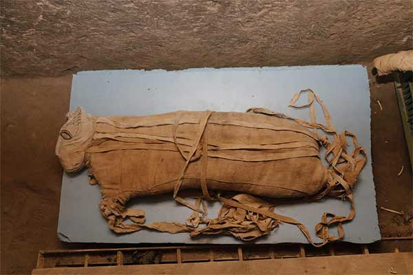 Momias de leones, cocodrilos y gatos son desenterrados en Egipto